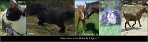 fiche-animaux-300x85